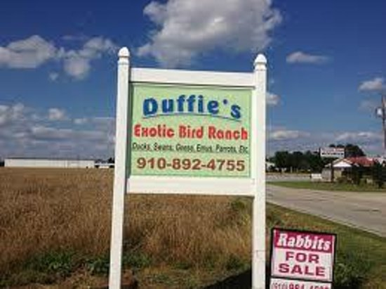 Duffie's Exotic Bird Ranch:                   Entrance sign/ your here