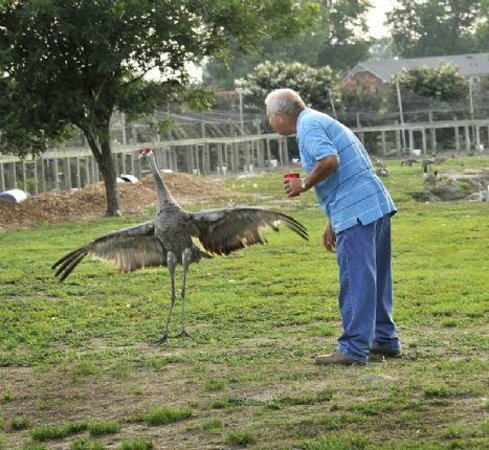Duffie's Exotic Bird Ranch:                   Mr. McLamb and his sand hill crane