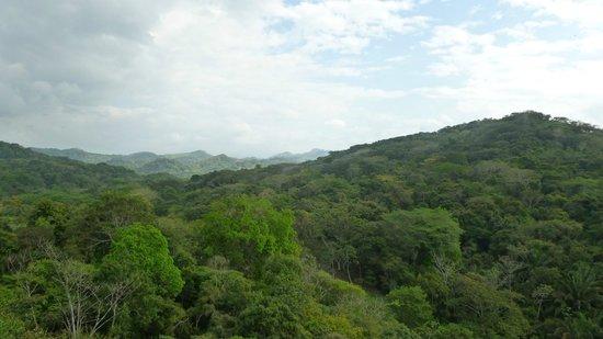 راديسون سوميت هوتل آند جولف بنما:                   Vue de la foret                 