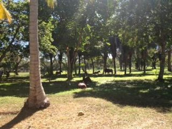 Hotel Villas Playa Samara:                   Wild Horses walking around the grounds.