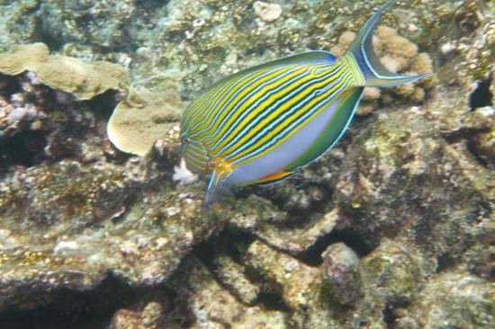 Cairns, Australia:                   Fishy