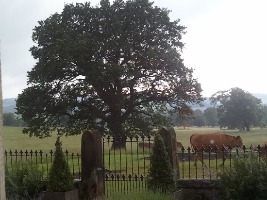 Heathy Lea Bed and Breakfast: Beautiful majestic tree outside bedroom