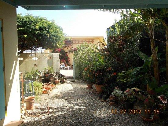 Hidden Eden Aruba:                   This is a beautiful, lush vacation spot.
