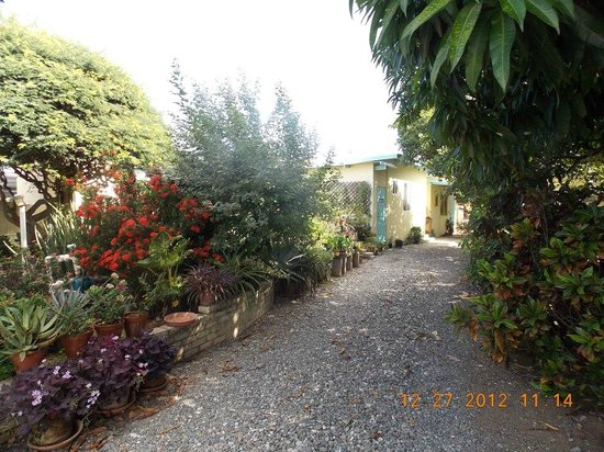 Hidden Eden Aruba:                   Driveway to the stand-alone rooms.  Look at all the beautiful plants