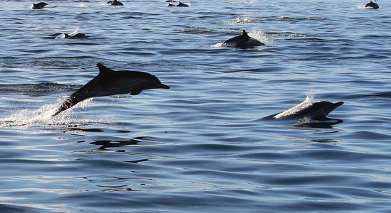 Catalina Coastal Tours:                                     Dolphin Trip
