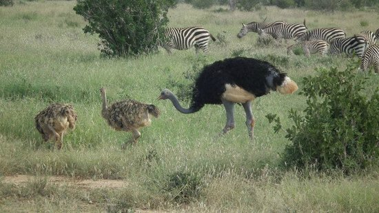 Baobab Beach Resort & Spa:                   emu family