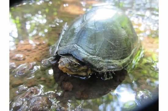 Tortuga Lodge & Gardens: Turtle on Trail