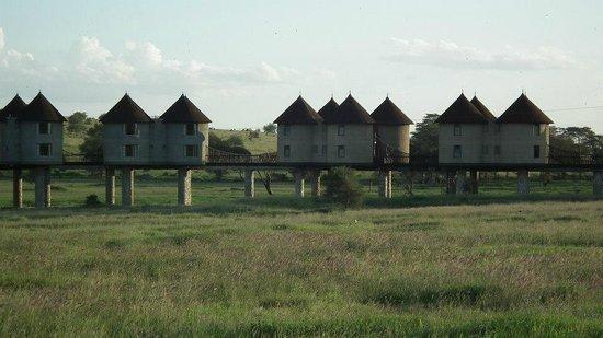 Baobab Beach Resort & Spa :                   Saltlick Lodge