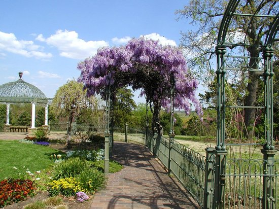 Wisteria Arbor At Gilcrease Museum Gardens Picture Of Gilcrease