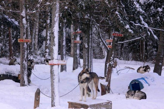 Expedition Wolf: dog pen