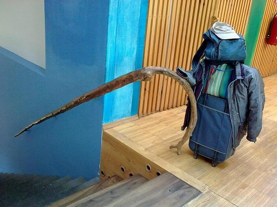 Hostel Celica:                   o corrimão da escada que leva ao sótão é um galho inteiro!