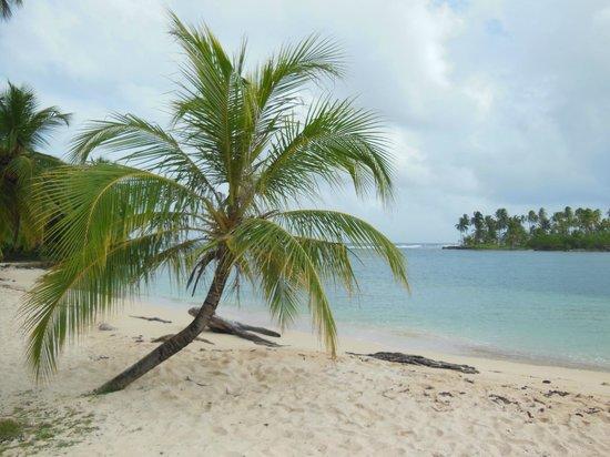 Yandup Island Lodge:                                     Island & beach where we went on an excursion