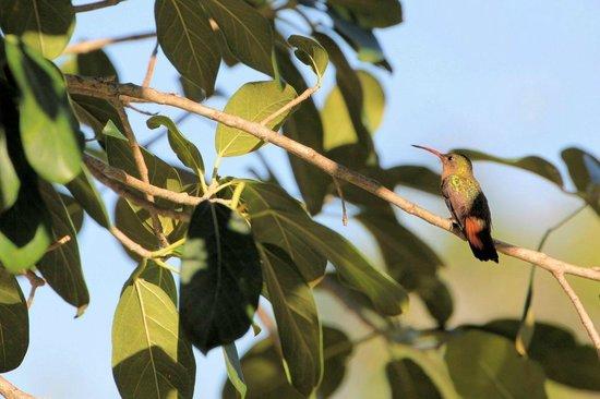 Belizean Shores Resort: Hummingbird at Belizean Shores