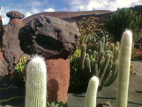 Contraste mineral vegetal photo de jardin de cactus guatiza tripadvisor - Jardin de cactus madrid ...