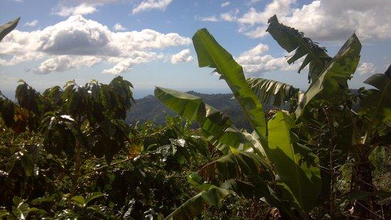 Hacienda Pomarrosa :                   Mountain Vista
