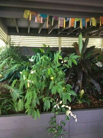 Clayfield B & B: Surrounding tropical gardens