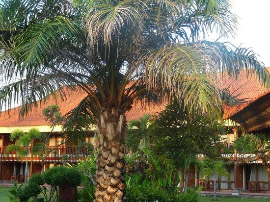 Inna Grand Bali Beach Hotel:                   еще кусочек сада