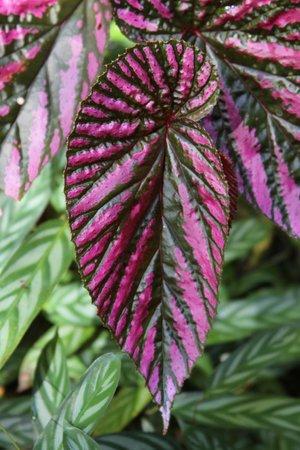 Hawaii Tropical Botanical Garden: so colorful
