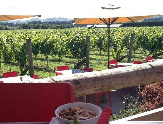 The Vineyard Cafe at Margrain Vineyard:                   eat above the vines...