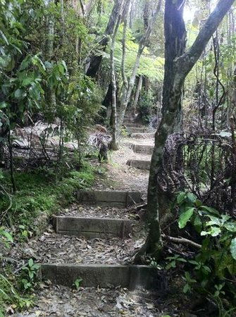 Whangarei Quarry Gardens: Trail to Kauri Trees
