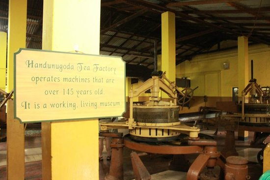 Handunugoda Tea Estate:                   150 year old machinery, still in use