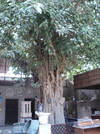 Sheikh Mohammed Centre for Cultural Understanding:                   Historic Tree