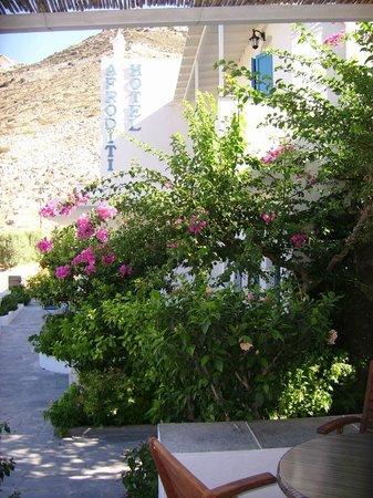 Hotel Afroditi:                   Jardin fleuri de l'hôtel