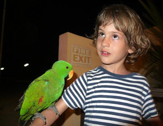 Maafushi Inn:                   Parrot Luis