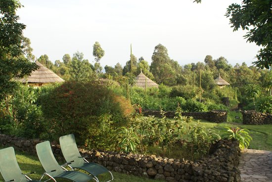 Mount Gahinga Lodge:                   tuin met cottages
