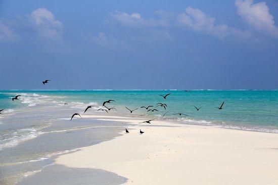 Cocoa Island by COMO:                   沙州上的水鳥
