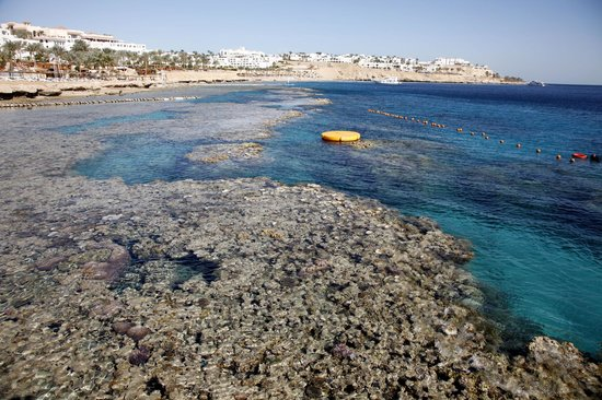 Hyatt Regency Sharm El Sheikh Resort:                   Riff