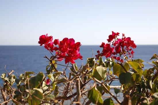 Hyatt Regency Sharm El Sheikh Resort:                   lanlage und Garten