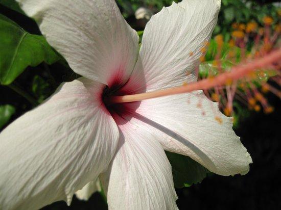 Endam Hotel:                   Тропические цветы во внутреннем дворике