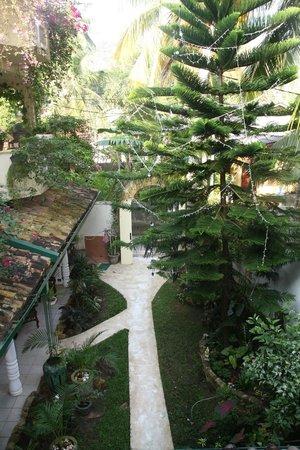 Palm Grove:                   Vu du jardin