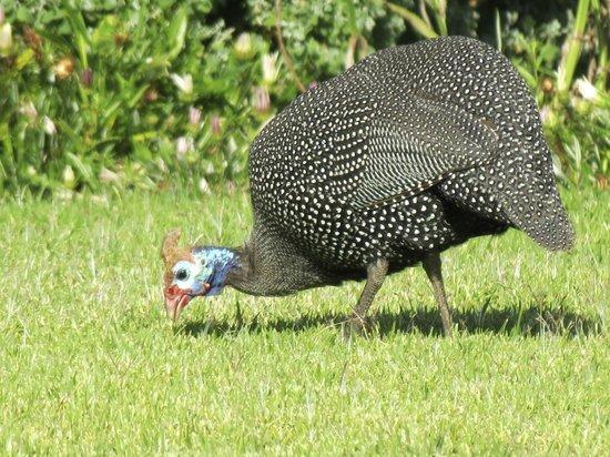Dongola Guest House : Birds