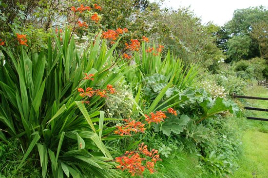 Bealey Court Holiday Cottages:                   Lovely gardens