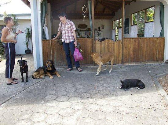 Hotel Berna Tica:                   Vorplatz, Dora und ihre lieben Hunde.