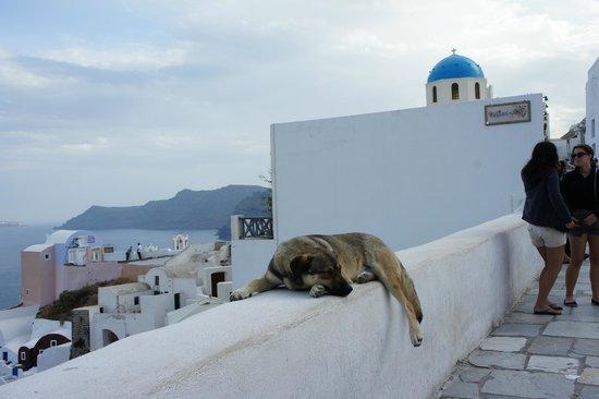 Thirasia: lazy dog on ledge