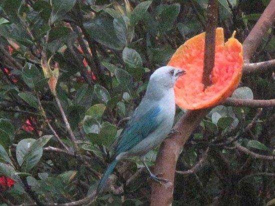 Hotel El Silencio del Campo: Viele Vögel im Garten.