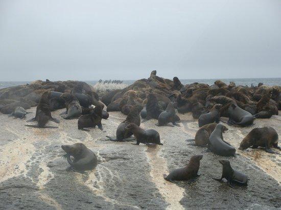 Duiker Island: seals