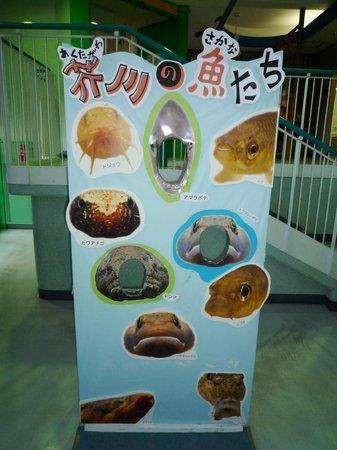 Settsu Gorge:                   あくあぴあ芥川の展示 顔だし写真撮ってね