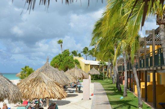 Tamarijn Aruba All Inclusive:                   passerella tra spiaggia e camere