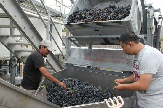 Keyways Vineyard and Winery: the start of turning grapes into wine