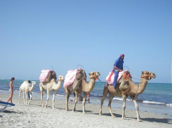 Djerba Mare: i cammelli sulla spiaggia