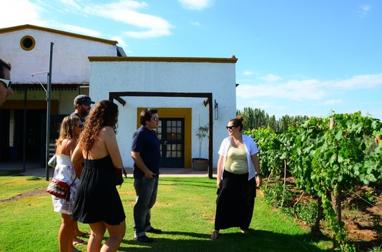 Ampora Wine Tours: First vineyard and tour