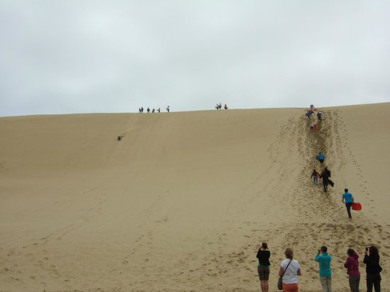 Ninety Mile Beach:                                     Surfers on the Sand dunes