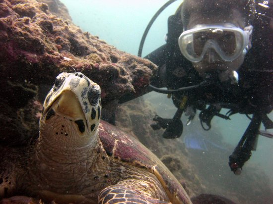 Marina Divers:                   02.2011