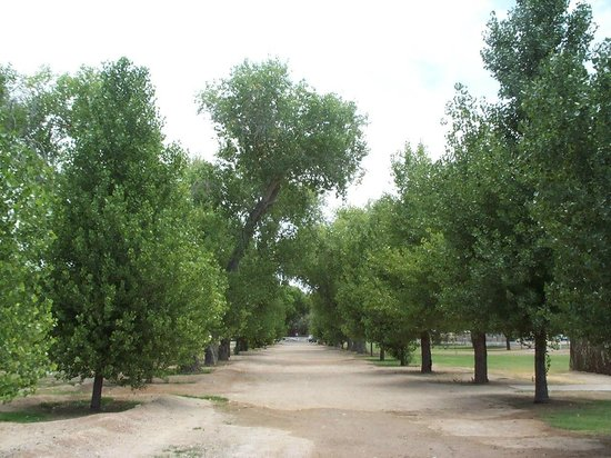 Fort Lowell Museum:                   Cottonwood alley