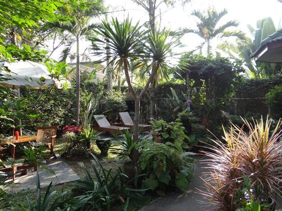 PJ's Place: the garden in the morning