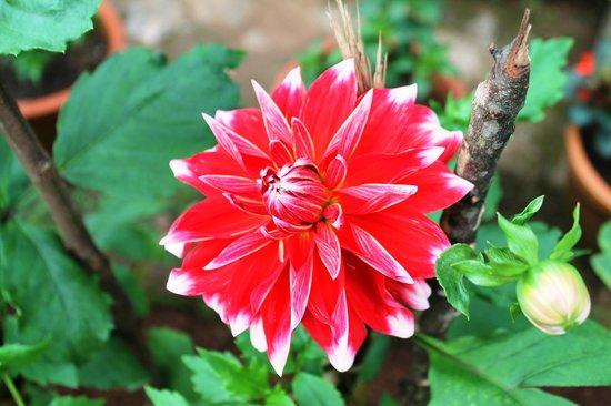 Kaivalyam Retreat:                   flower